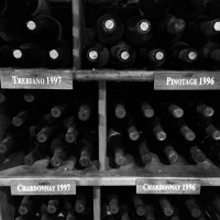 Wine-cellar,-Dal-Pizzol,-Brazil,-by-Peter-Richards-MW