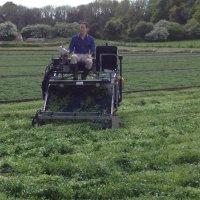 Harvesting (Saturday Kitchen, Alresford)